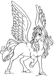 Konj 16
