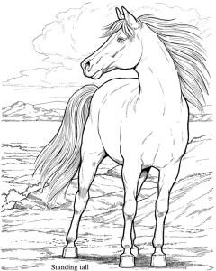 Konj 19