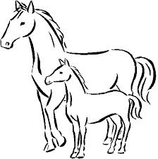 Konj 8