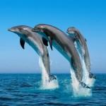 Morske živali