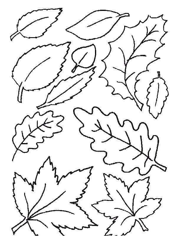 Jesen 12