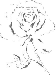 Rože 11