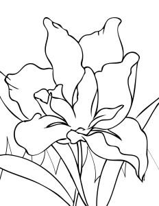 Rože 12