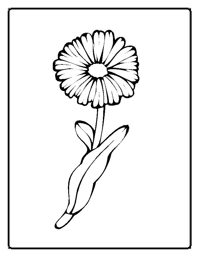 Rože 20