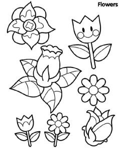 Rože 24