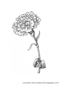 Rože 27