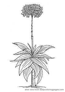 Rože 28