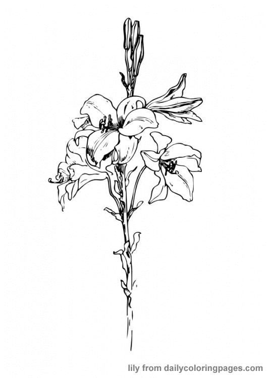 Rože 29