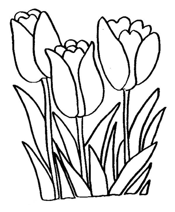 Rože 4
