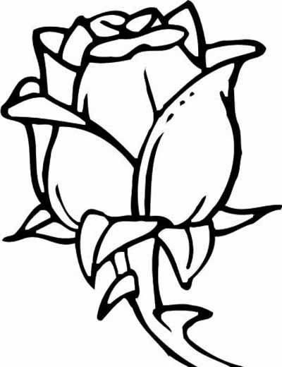 Rože 5