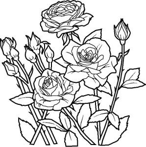 Rože 6