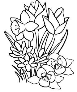 Rože 7