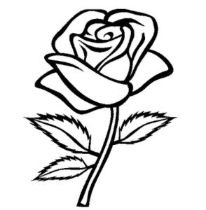 Rože 8