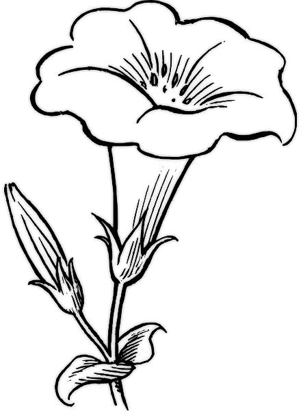 Rože 9